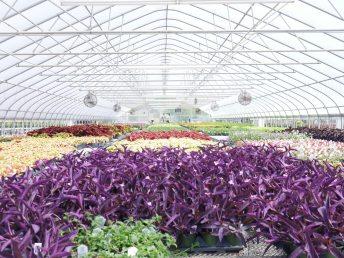 Ornamental Greenhouse