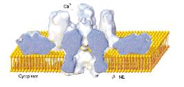 latrotoxin in membrane