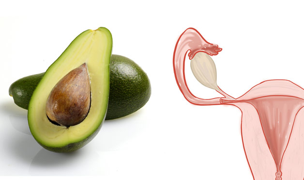 04-Avocados-UterusFoods-That-Look-Like-Body-Parts-1