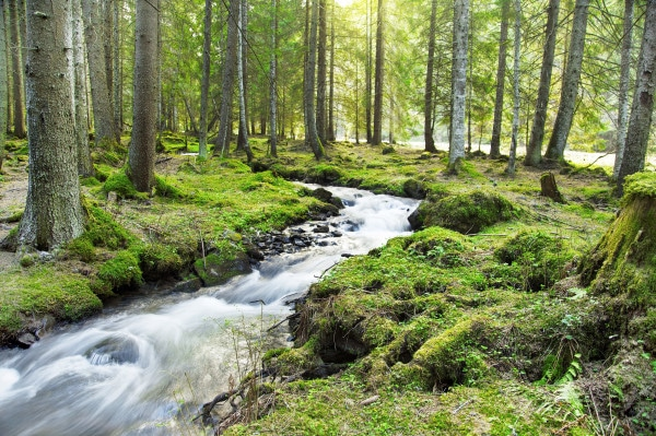 River Flowing in the Forest Landscape