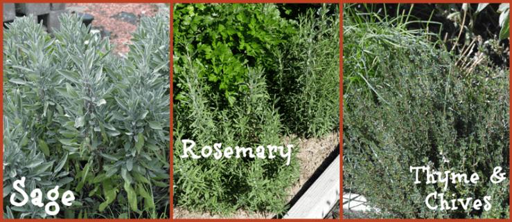 grannie geek, herb garden, sage, rosemary, thyme