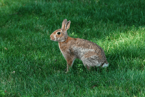1. Cottontail | July 24, 2013, 5:51:31 pm