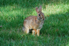 2. Cottontail | July 24, 2013, 5:51:39 pm