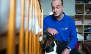 ATN détection canine de punaises de lit