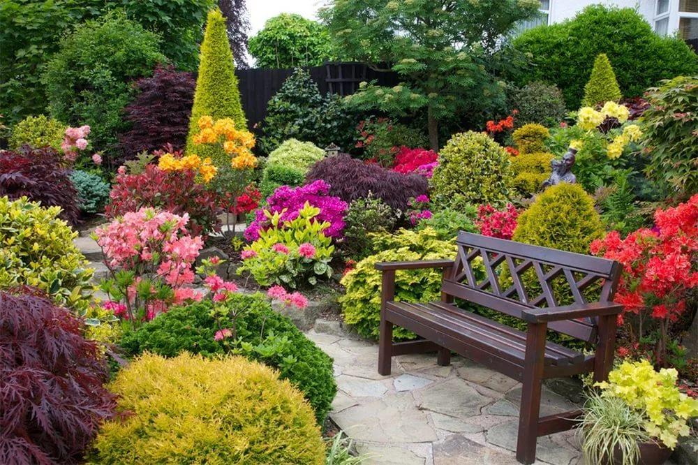 Цветущие растения  темой сегодняшнего разговора станут красивоцветущие