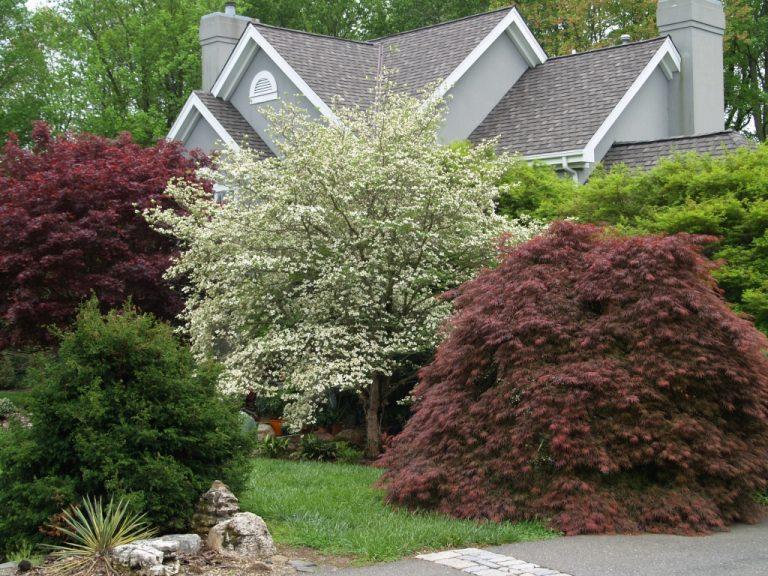 Декоративно лиственные растения для сада с красивой формой, впишутся в любую садовую композицию