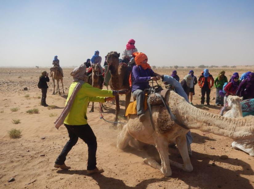 dromedario en el Desierto