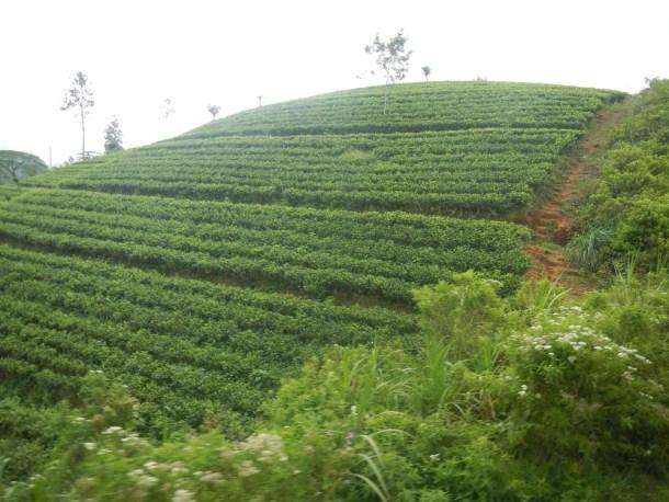 Imprescindible en Sri Lanka
