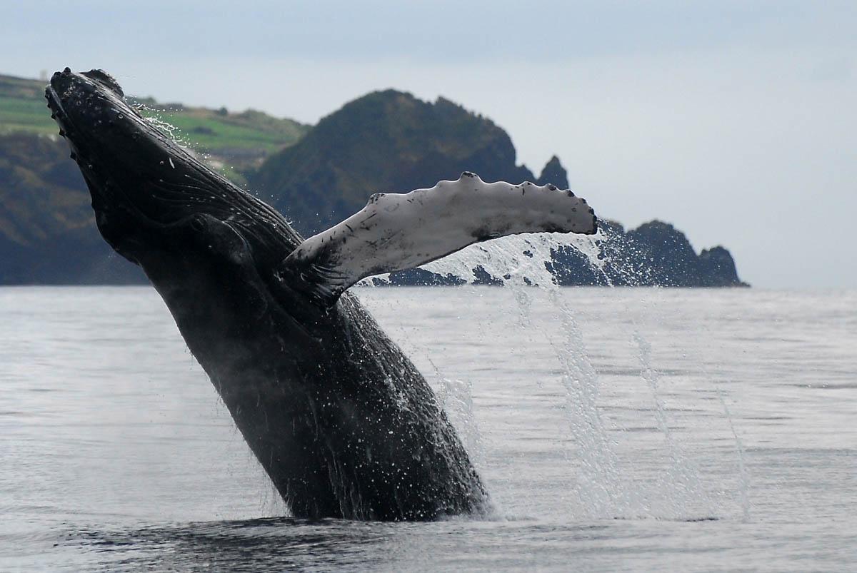 Observacion de cetaceos