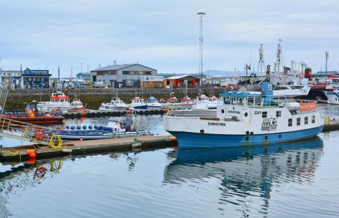frailecillos en Islandia
