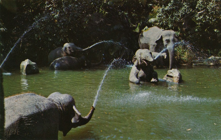 Elephants squirt each other with water from their trunks.