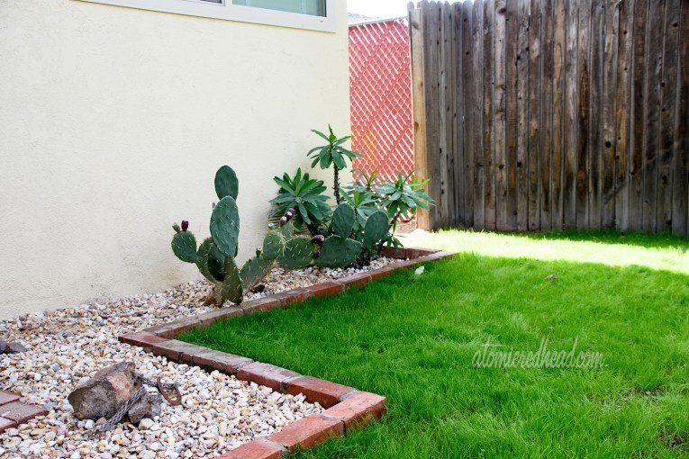 A prickly pear sits in the brick planter, jutting out from the side of the house.
