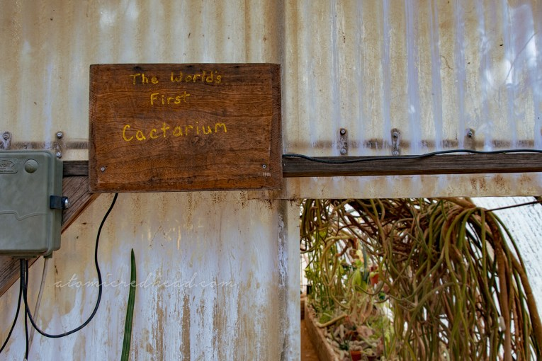 "A wood sign reading ""The World's First Cactarium"""