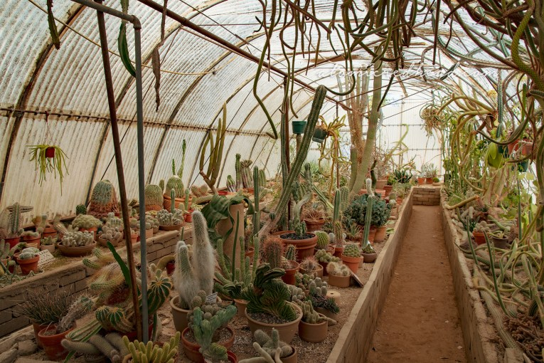 Inside the Cactarium, where various small cacti grow from pots and some even hang from above.