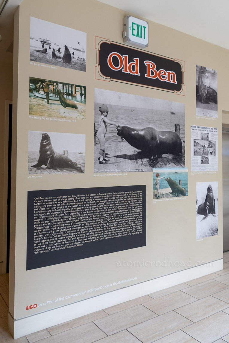 Old Ben's wall at the Catalina Island Museum, featuring both color and black and white photos of him.