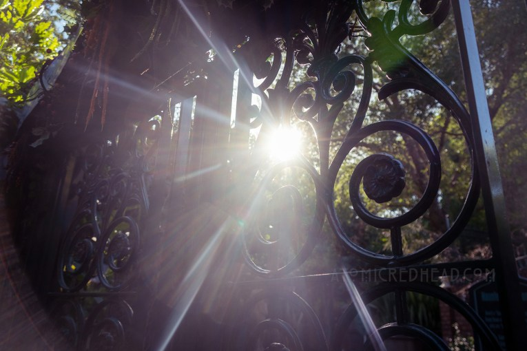 Sun peeks through the trees and a green wrought iron gate.