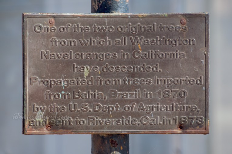 "Plaque on site that reads ""One of the two original trees from which all Washington Navel oranges in California had descended. Propagated from trees Imported from Bahia, Brazil in 1870 by the US Dept. of Agriculture and sent to Riverside, California in 1873."
