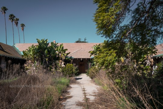 A low, single story building has an overgrown front yard area, and weeds growing through the cracks of the sidewalk. Banana trees have grown as tall as the roofline.