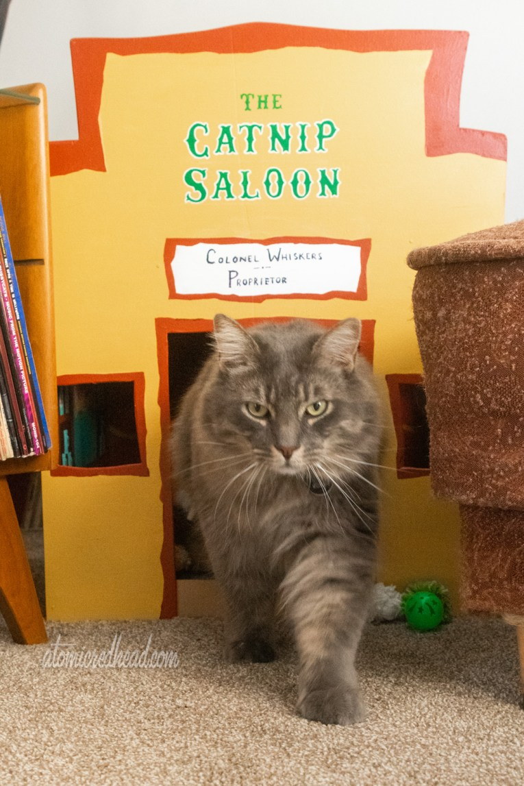 "Our cat, Colonel Whiskers, grey and fluffy, emerges from a small, cat sized saloon painted yellow with green text that reads ""The Catnip Slaoon"""