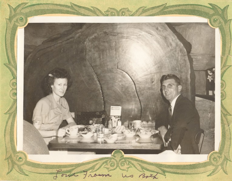 A couple sits at a table in front of a massive cross section of a giant redwood tree.