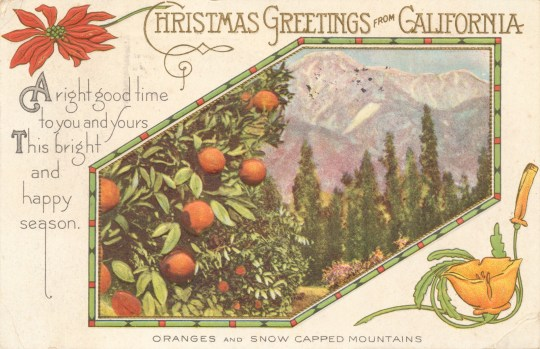 "A photograph of oranges on trees with snowcapped mountains behind makes up most of the postcard. A poinsettia in the upper left, and a golden poppy in the lower right. Text below the image reads ""Orange and Snow Capped Mountains."" Text across the top reads ""Christmas Greetings from California"" And text along the left reads ""A right good time to you and yours This bright and happy season."""