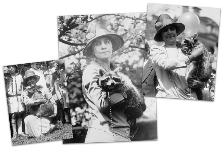 Collage of three black and white photos of First Lady Grace Coolidge holding Rebecca the raccoon.