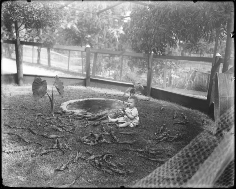 Photograph of a baby playing with young alligators at an alligator farm (possibly the California Alligator Farm, Los Angeles), ca.1900. The baby sits next to a small manmade pool inside a chicken wire holding pen, grasping a young alligator in his hand. Surrounding the baby, several dozen young alligators can be seen of roughly one foot in length. Beside the manmade pool, two small plants are visible. Two large trees border the sides of the fence, and additional trees can be seen in the background.