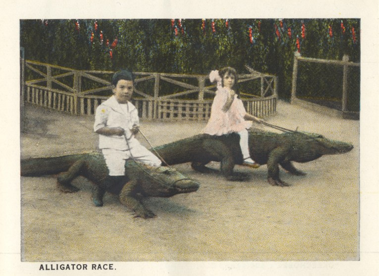 """Two children each sit atop their own gator, holding reins. Caption reads """"Alligator race."""""""