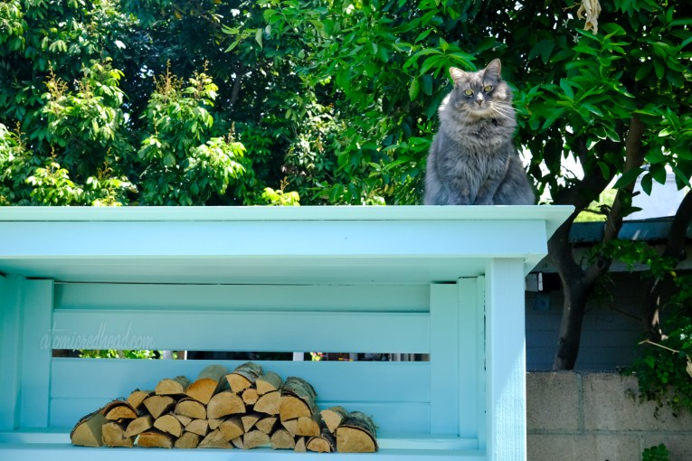 Colonel Whiskers sits perched atop the turquoise wood shed.