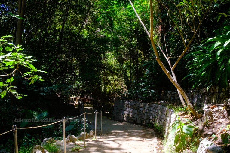 A stone wall holds up a variety of trees that loom over a pathway along a stream.
