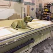 New Shop Fore-dog