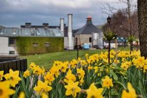 Springtime Yellow Flowers In UK