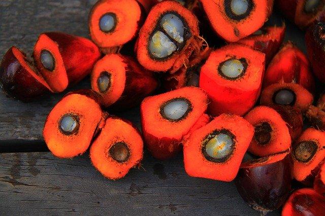 huile de palme fruit