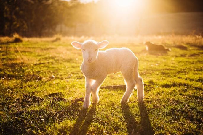 jesus is the lamb of god www.atozmomm.com bsf genesis study