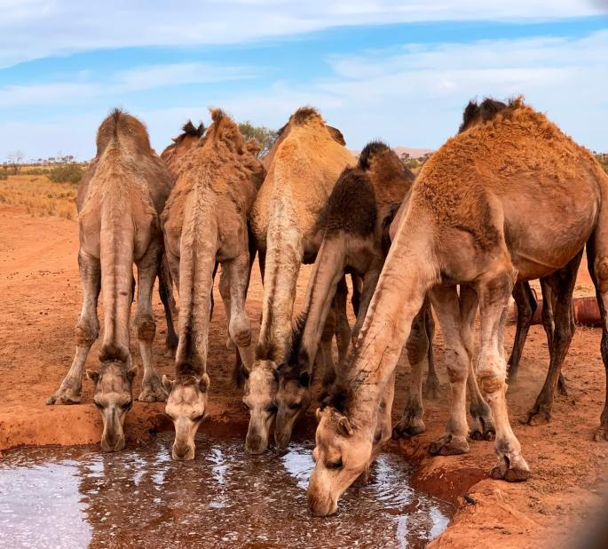 rebekah watered the camels in bible www.atozmomm.com