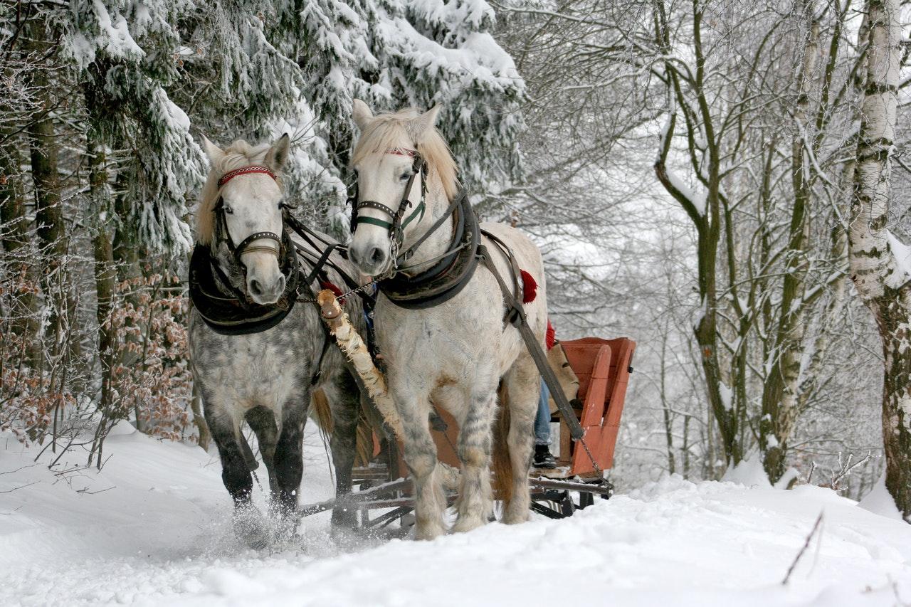 christmas sleigh www.atozmomm.com