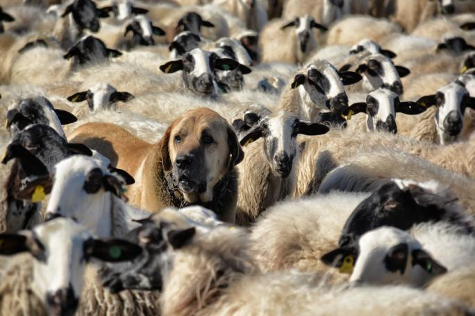 jacob blesses his son shepherd dog www.atozmomm.com