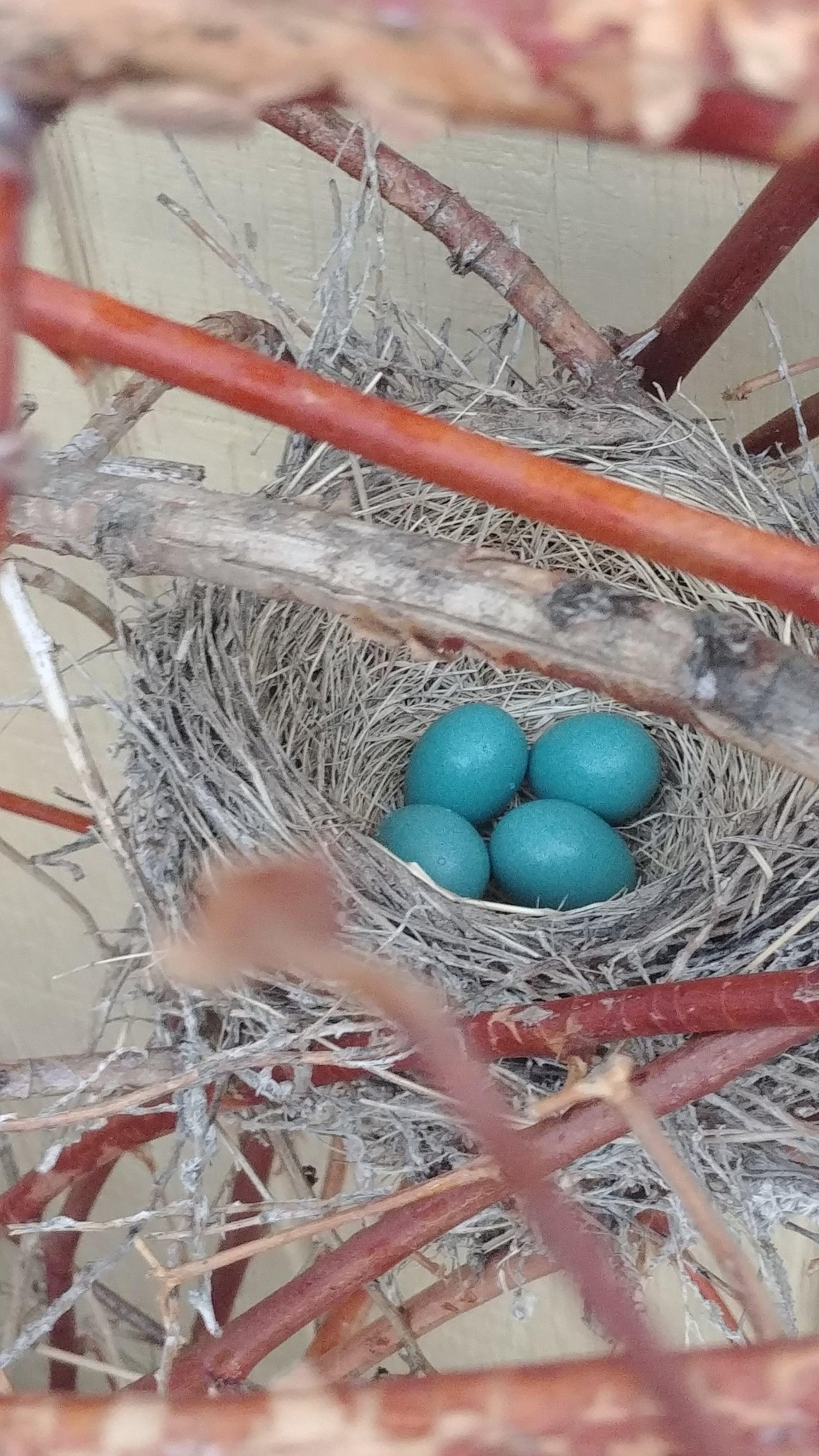 robin's eggs www.atozmomm.com