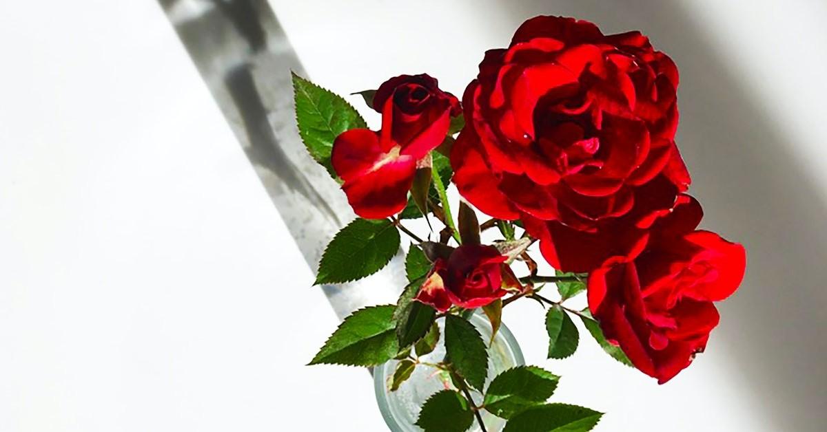 www.atozmomm.com summer bible study online bsf wordgo study of hebrews red rose
