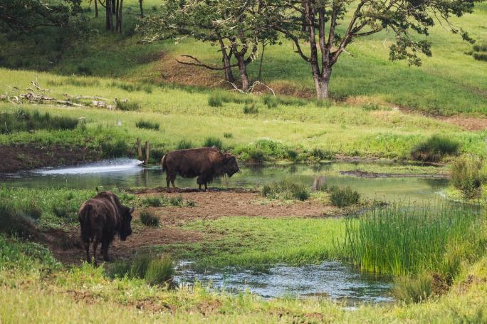 buffalo www.atozmomm.com