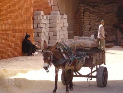donkey-a