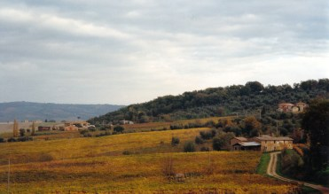 The autumn colours of the vines surrounding Montalcino