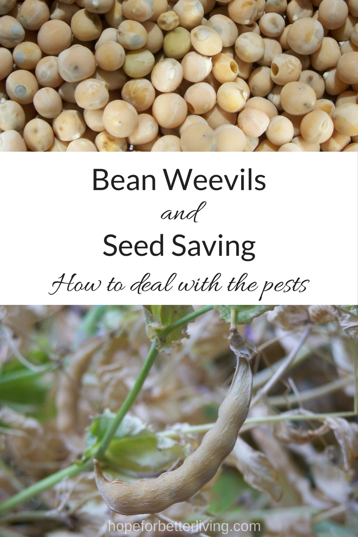 Recognize the signs and learn how to protect your seed