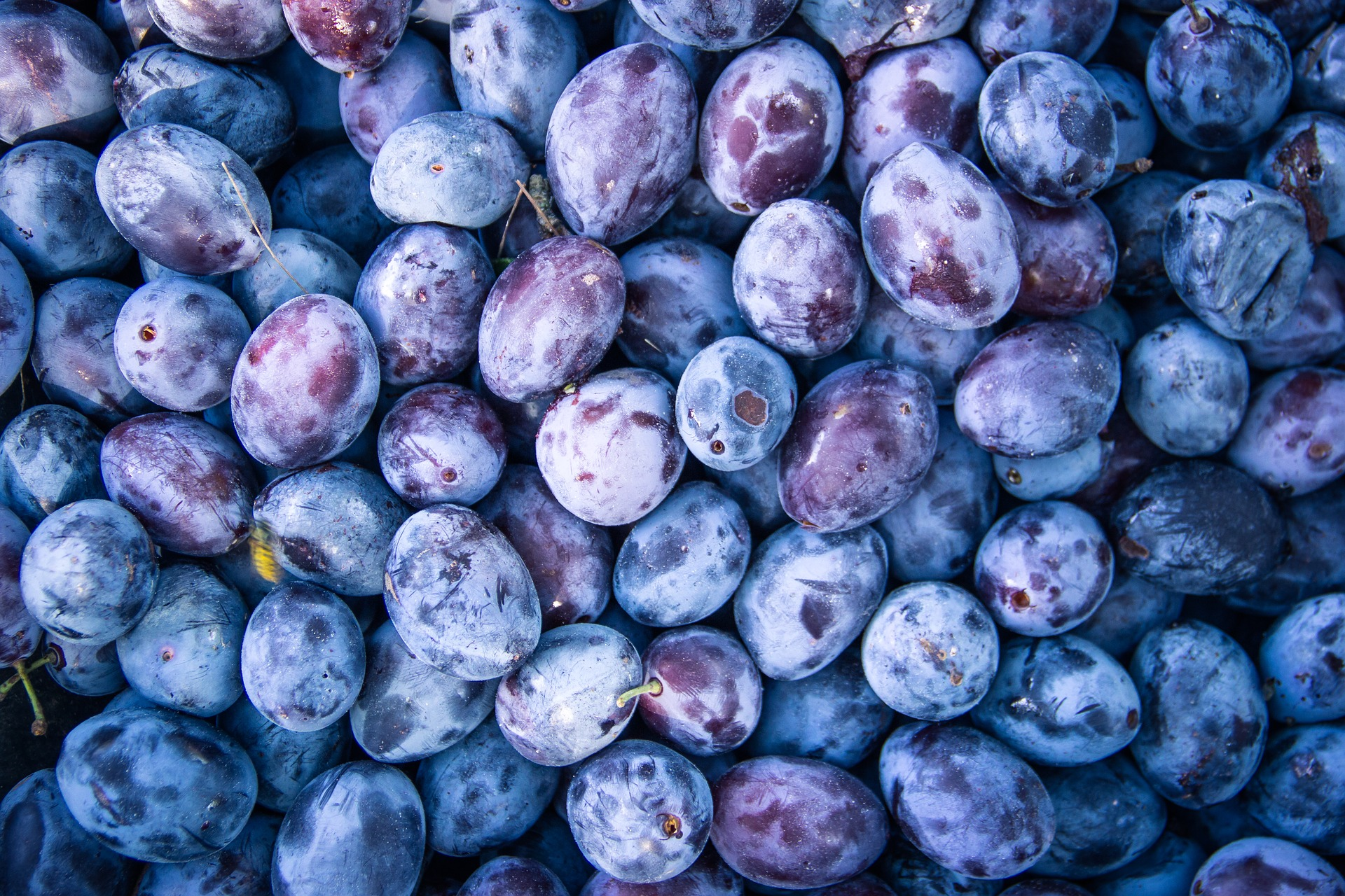 A Simple Method for Pitting Plums Faster