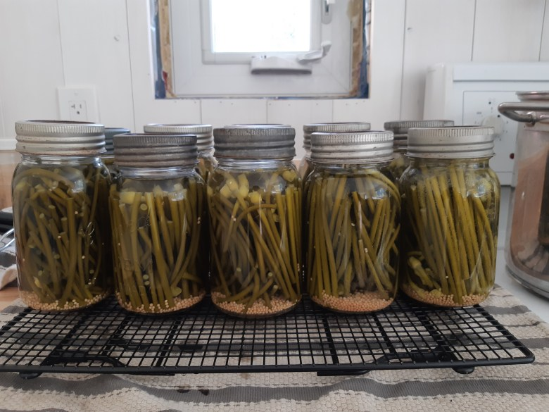 pickled garlic scapes: a home canning recipe