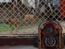 templeidol&dogs