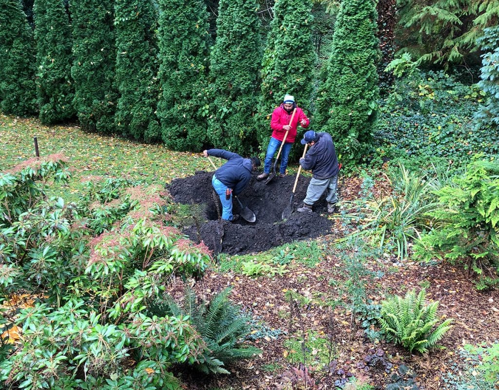 big tree hole digging