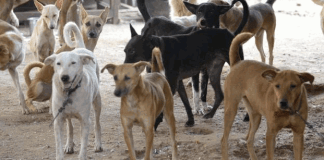 A Township in Hyderabad Near To Ghatkesar Allegedly Poisoned 100 Stray Dogs