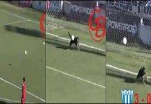Dog Saves Goal