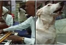 Dog participate in Bhajan